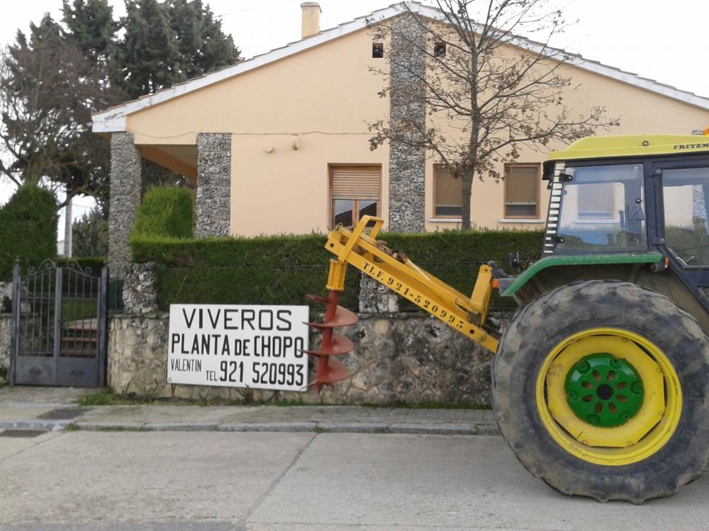Viveros valent n venta de chopo en segovia plantaciones for Viveros en palencia