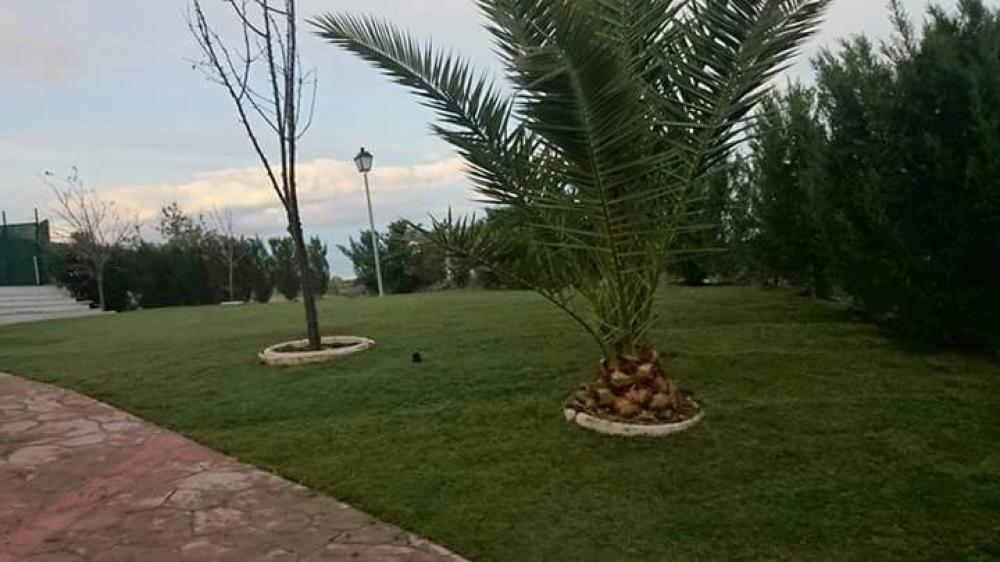 Multiservicios el casar empresa de jardiner a en madrid for Jardineria las rozas