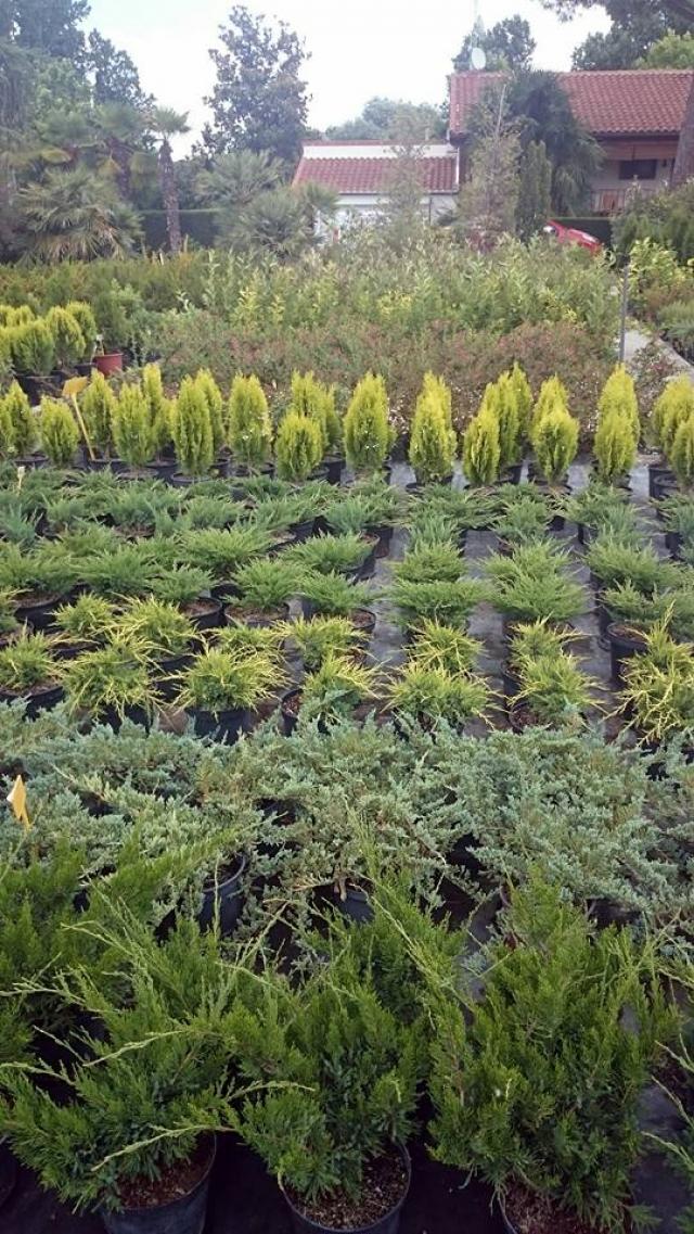 Viveros izquierdo empresa de mantenimiento de jardines y for Viveros de arboles en madrid