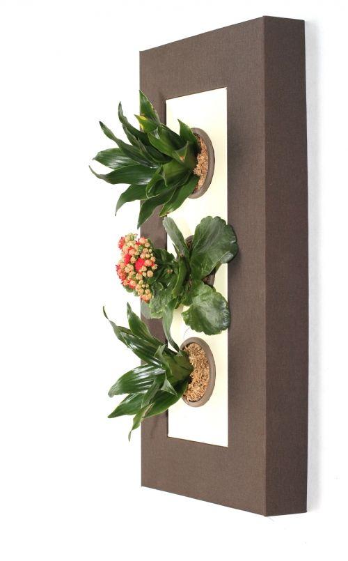flowerbox inventor del cuadro vegetal tienda online de On cuadros de plantas verticales