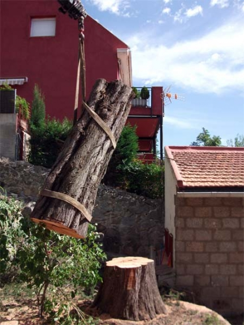 Empresa de jardiner a profesional en madrid madrid madrid for Empresas de jardineria