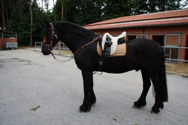 Comerciosyservicios com directorio de empresas directorio gratuito de empresas - Silla montar caballo ...