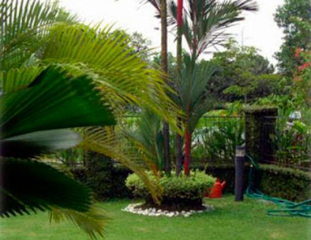 plante verde jardineros expertos en mantenimiento y dise o