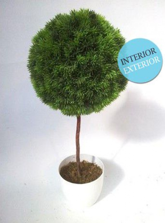 What is your plant tienda online de plantas de interior y exterior plantas artificiales - Plantas de interior online ...