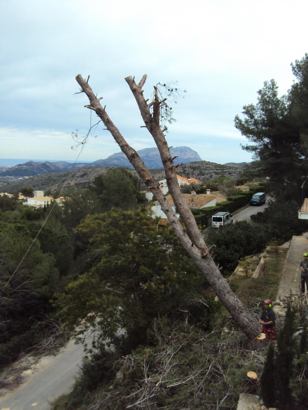 Ilex Jardiner A Empresa De Podas En Alicante Empresa De