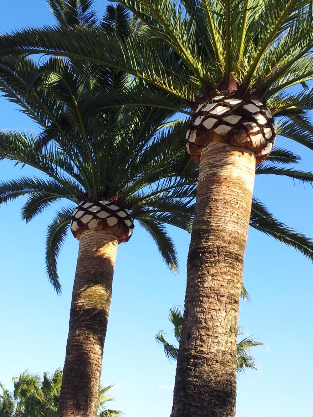 Ilex jardiner a empresa de podas en alicante empresa de for Empresas de jardineria valencia