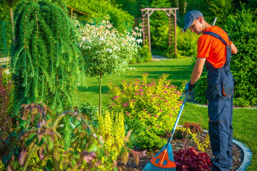 Arbolaiza jardinero profesional en madrid centro - Centros de jardineria madrid ...