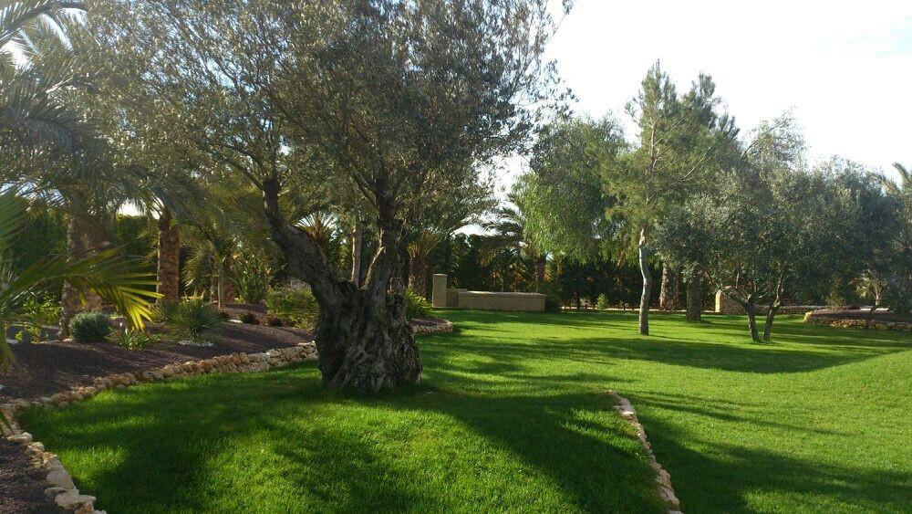 Jardiner a pozo empresa de jardiner a en alicante for Empresas de jardineria