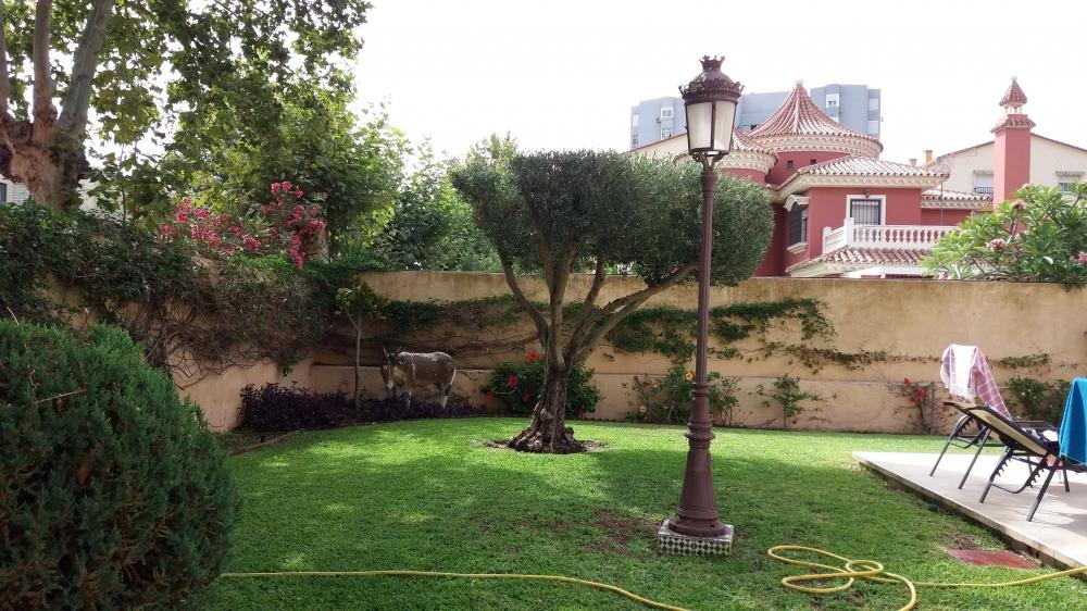 Tu jard n jardiner a general en m laga mantenimiento de - Empresa jardineria malaga ...