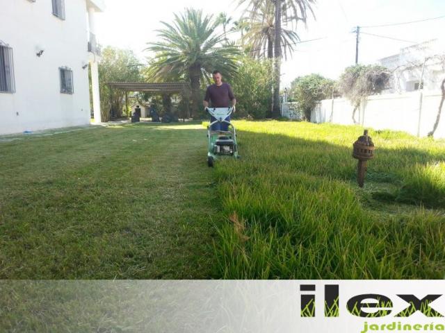 Ilex jardiner a empresa de podas en alicante empresa de - Jardineria en valencia ...